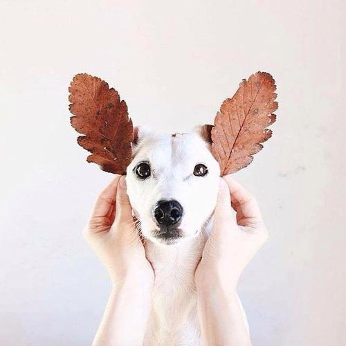 leafy-dog
